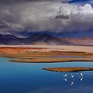 ATACAMA DESERT - CHILE by Michael Sheridan