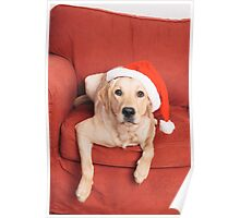 Dog with Christmas hat on armchair Poster