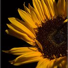 Sunflower by ReidOriginals