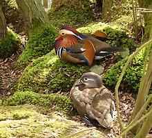 Sitting ducks by edward dijmarescu
