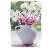 Snapdragon flowers Poster