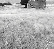 Old Farmhouse by Andrew  Makowiecki