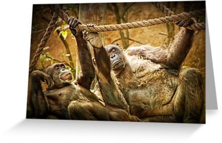 Fine Art Photograph of Chimpanzees by Randall Nyhof