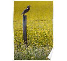 Meadowlark Singing Poster