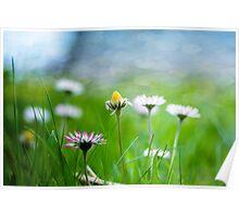 Frühlingswiese Poster