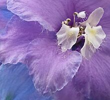 Delicate grace of a delphinium blossom by Celeste Mookherjee
