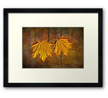 Two YellowOrange Fall Leaves  Framed Print