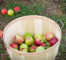 Apple Picking by Nicole Jeffery