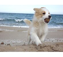 Border Collie Puppy on the Beach Photographic Print