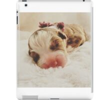 Australian Shepherd Sleeping Beauty iPad Case/Skin