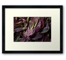 Spring Seeds Framed Print