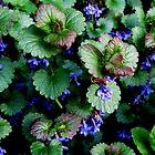 Wild Ground Ivy by Debbie Robbins