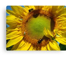 The Insect Feast Canvas Print
