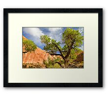Willow Gulch Cottonwood Framed Print