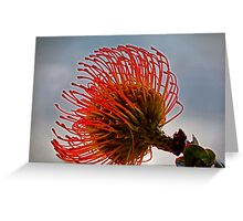 Unusual and unique flower, the Protea Pincushion Greeting Card