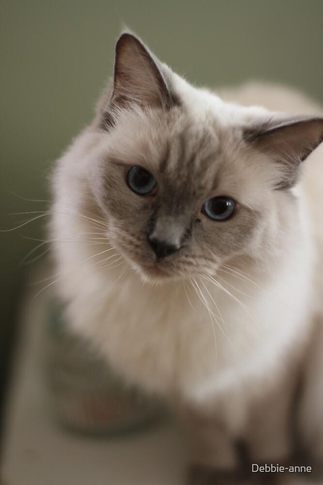 The prettiest Ragdoll Cat by Debbie-anne