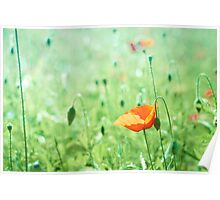 Poppy in bright green field  Poster