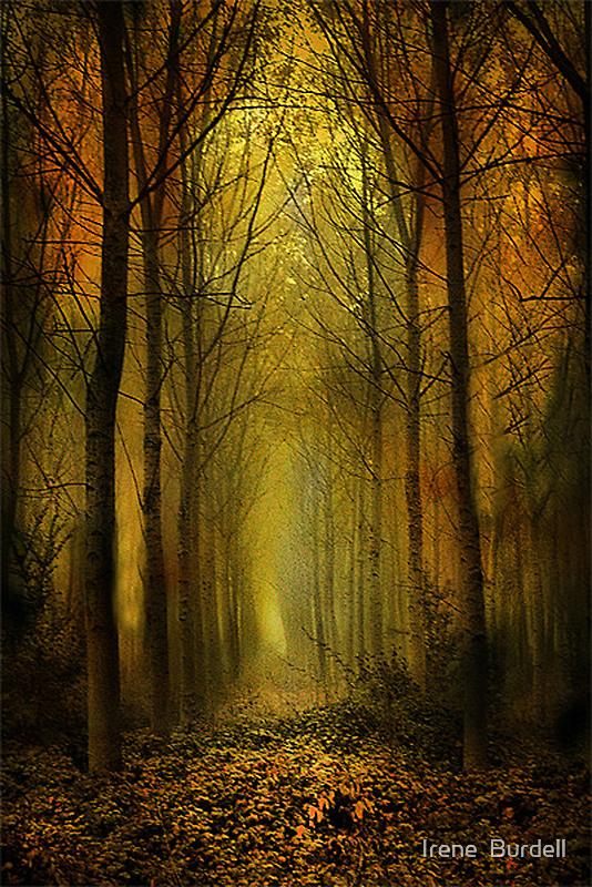 Birch trees. by Irene  Burdell