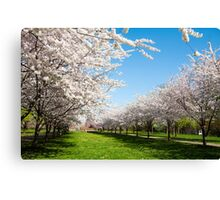 Blossoms Row Canvas Print