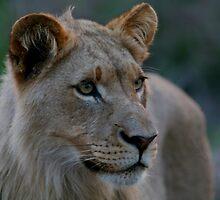 Predatory Stare by naturalnomad