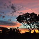 Outback Sunset  by Ruth Anne  Stevens