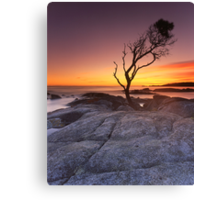 """That Tree"" ∞ Binalong Bay, Tasmania - Australia Canvas Print"