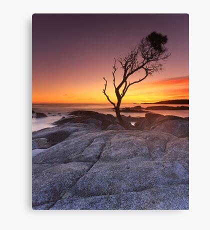 """That Tree"" ∞ Binalong Bay, Tasmania - Australia Canvas Print"