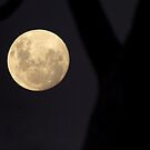 Super Moon -, May 2012 by shortshooter-Al