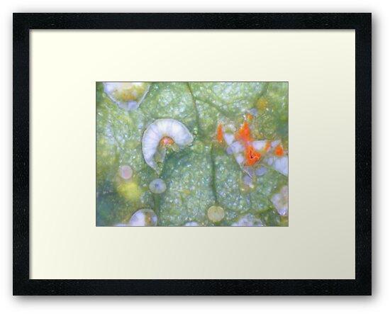 Amongst the Leaf Litter by Stephanie Bateman-Graham