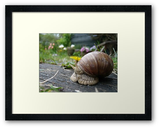 Snail and yellow flower by HeklaHekla