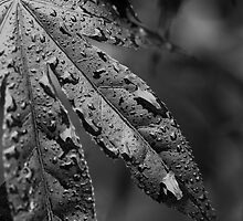 WET-LEAF by Stephen J  Dowdell
