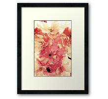 Vintage cherry blossom Framed Print