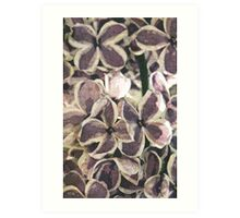Lilacs in the fifties Art Print