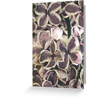 Lilacs in the fifties Greeting Card