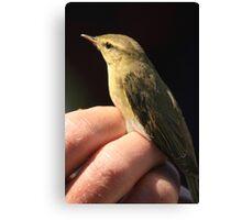 Bird ringing at Portland bill Canvas Print