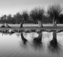 Stour Valley Willows by Christopher Cullen