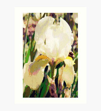 Vintage white iris Art Print