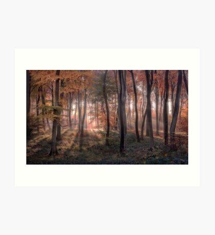 Autumn Woodland Dawn Art Print