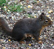 Gabby the Douglas Squirrel by Tori Snow
