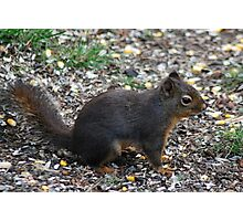 Gabby the Douglas Squirrel Photographic Print