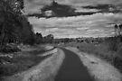 Bunny Lane by Yuri Lev