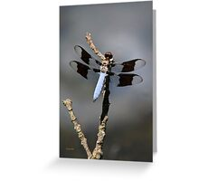Common Whitetail Dragonfly Art Greeting Card