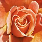 Simply  Rose by Maria  Gonzalez