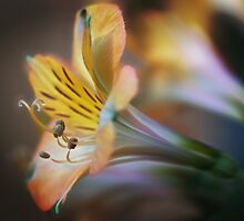 Summer Beauty by Photokes