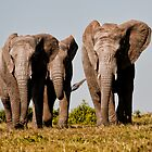 Kwantu Elephants  2 by Warren. A. Williams