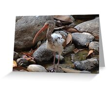 Hi My Name Is Ibis - Hola Mi Nombre Es Ibis Greeting Card