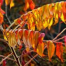 Fall Sumac Leaves during a Michigan Autumn by Randall Nyhof