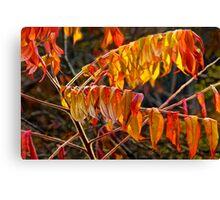 Fall Sumac Leaves during a Michigan Autumn Canvas Print