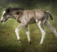 Run Wild, Run Free by Carol Bleasdale