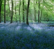 Bluebell Woodlands by Photokes